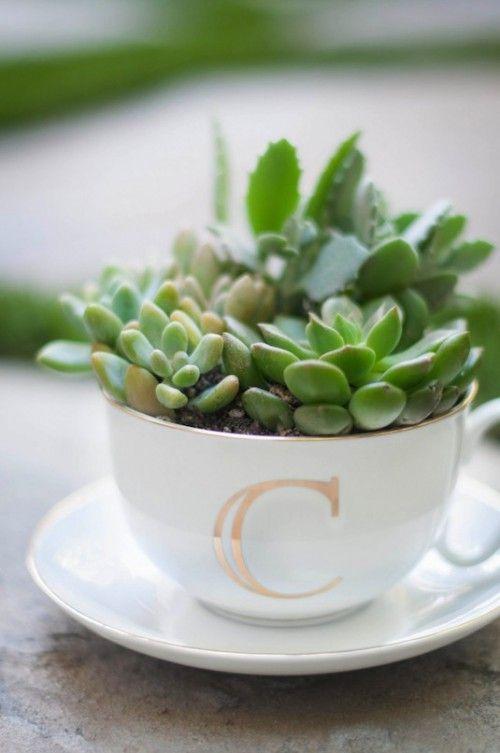Leuk idee om iemand kado te geven; kop en schotel met een (vet)plantje erin.