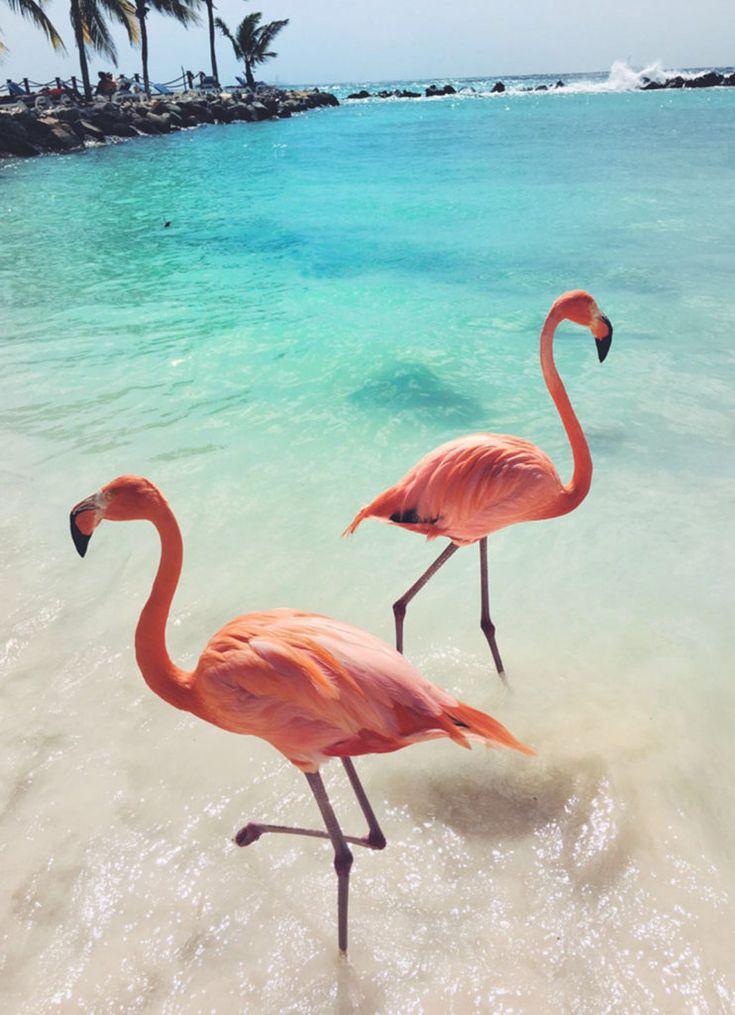 вот картинки для телефона фламинго парке патриот готичен