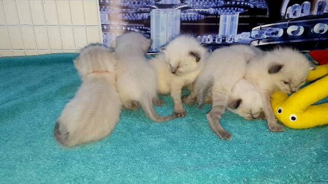 Video on Kitten Closeups! on Livestream