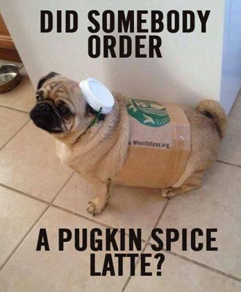 Funny Dog Memes in 2015 - 10 of the Best Dog Memes & Cute Photos