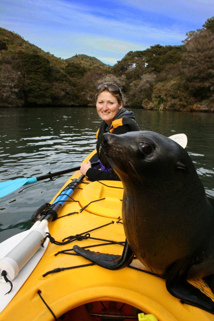 Abel Tasman - Kahu Kayaks. ~ I wish that was me! =)