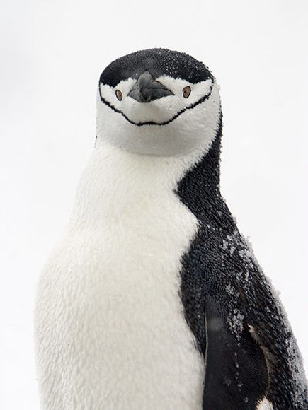 BUT I CAN'T WIPE THIS GRIN OFF MY FACE!