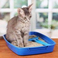 #dogalize Areneros para gatos: un elemento importante para la casa #dogs #cats #pets