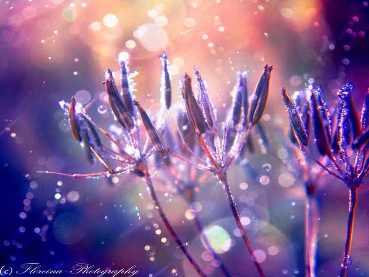 Purple touch by Floreina-Photography on DeviantArt