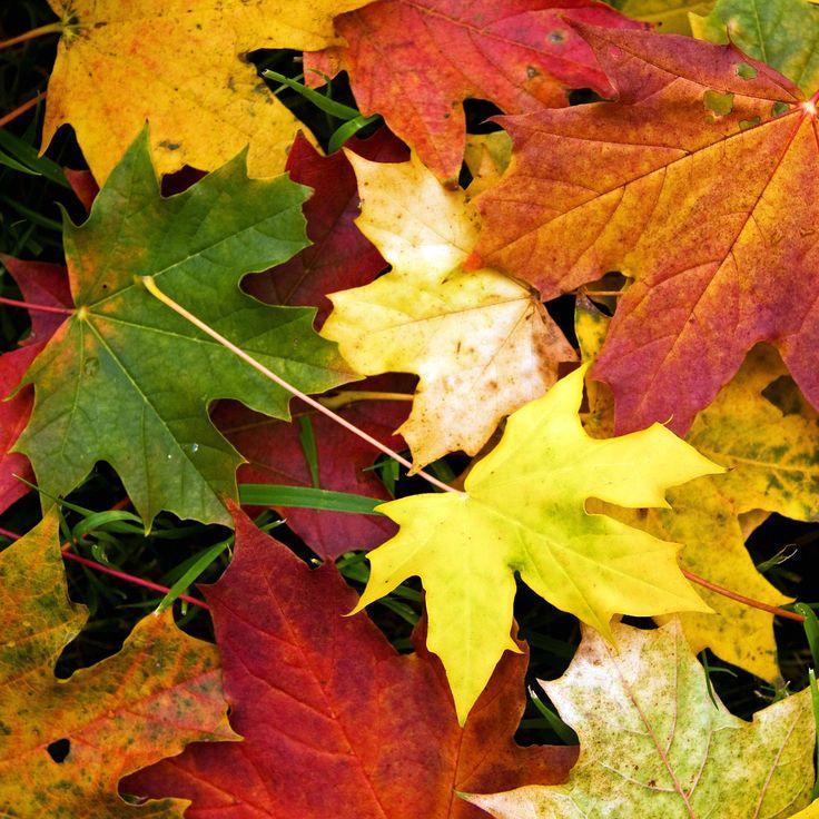 秋の色とりどりの落ち葉