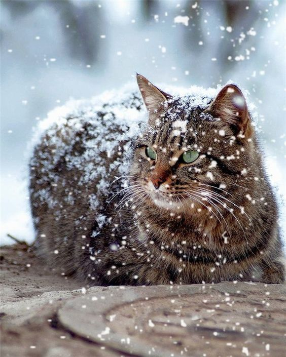 Cats Walking In The Snow For The First Time [VIDEO – Petra Ewers