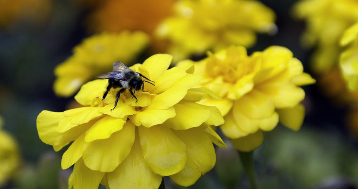 The bee's knees by Michael Inglese on 500px