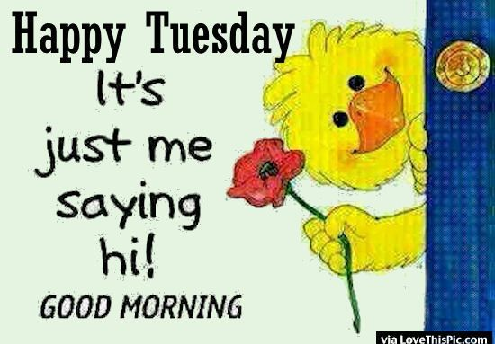 Happy Tuesday Its Just Me Saying Good Morning