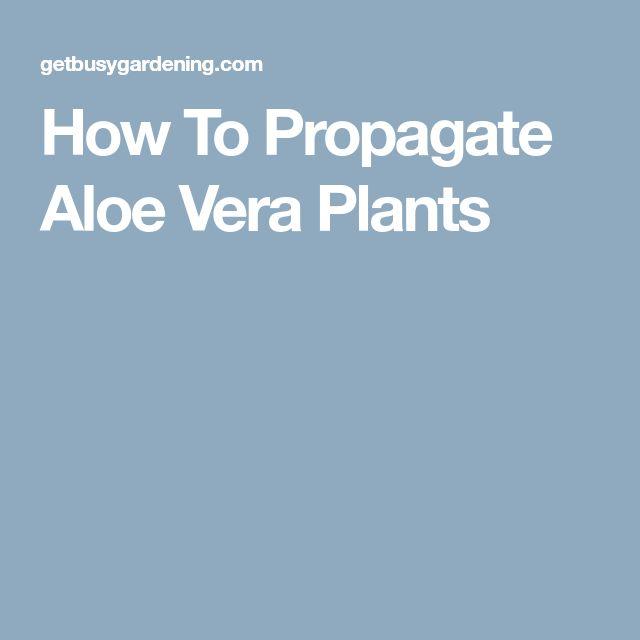 How To Propagate Aloe Vera Plants