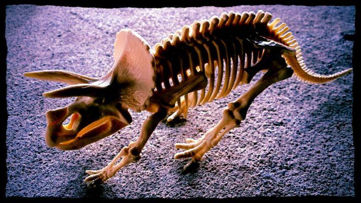 skull Dino