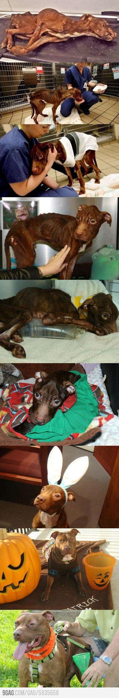 Animal abuse needs to stop.