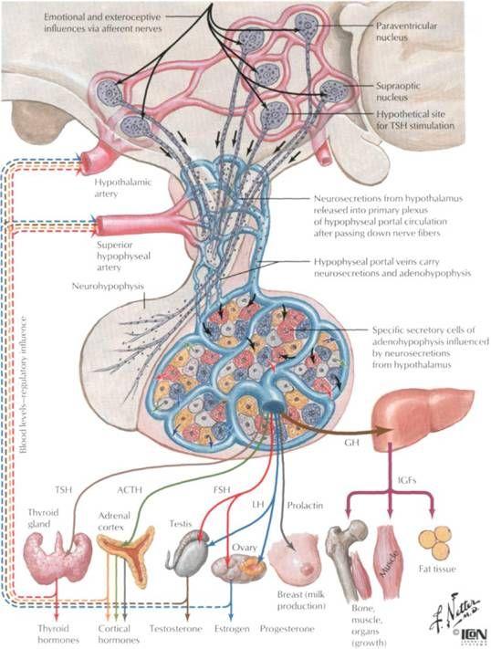 Endocrine Pathology.