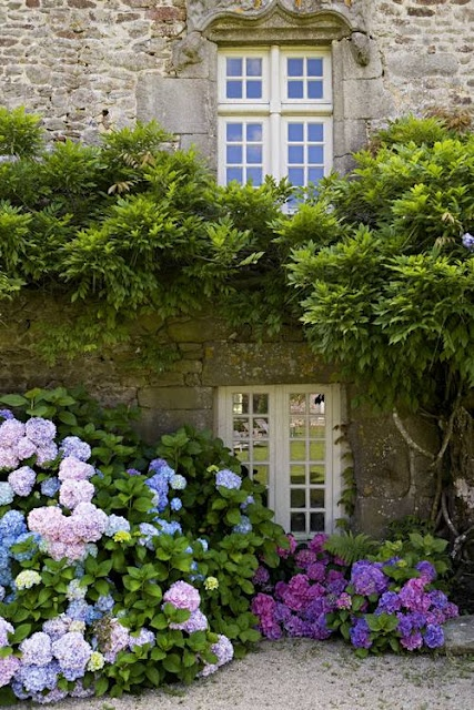 Gorgeous old building with so many hydrangeas.