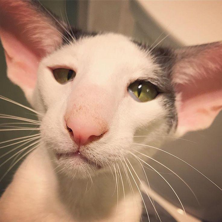 постройки картинки кошек грузин и его грузинки можете купить кабели