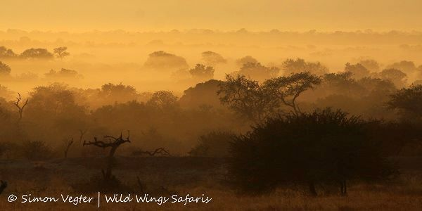 Chilly early wintery mornings are misty and moody right now in #KrugerNationalPark ...