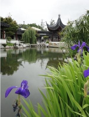 Pond and Iris