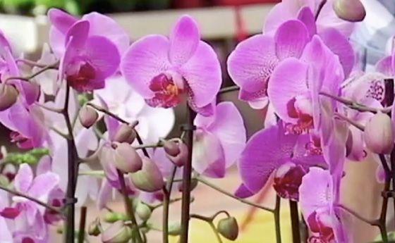 Le orchidee sono il fiore più bello e delicato da curare: come fare ad avere dei fiori bellissimi? Per avere delle orchidee perfette il segreto è tutto nel punto in cui la posizionate e quanto le annaffiate. Ricordatevi sempre che le orchidee sono dei fiori tropicali e che per farle fiorire dovrete cercare l'ambiente di casa  … Continued