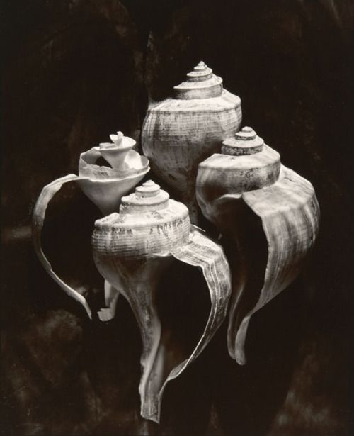 Olivia Parker - Whelks Objects 1980