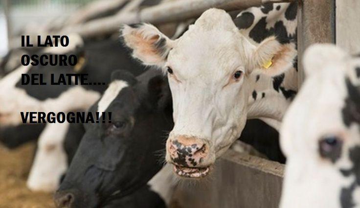 Il lato oscuro LATTE... Non si tratta più di mucche, bensì Bestie da Produzione! VIDEO