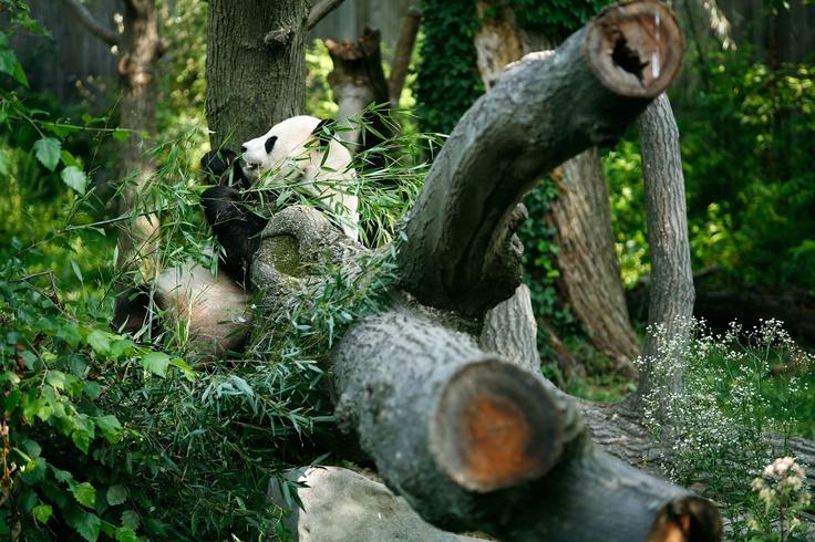The 4th Birthday Of Giant Panda