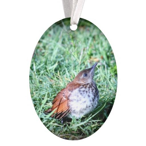 Baby Thrasher Bird Ornament