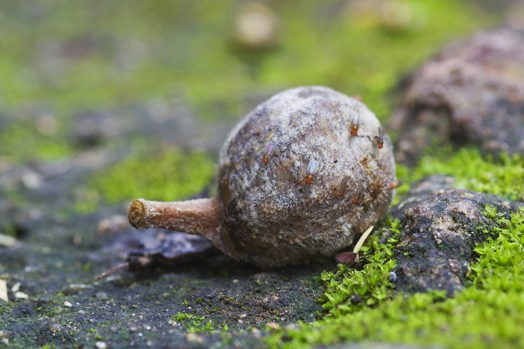 Fallen Fruit: macro of a wild fig on the forest floor, by Leon Marais.