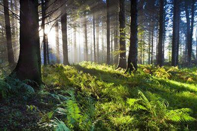 18 λόγοι που τα δάση είναι ανεκτίμητα