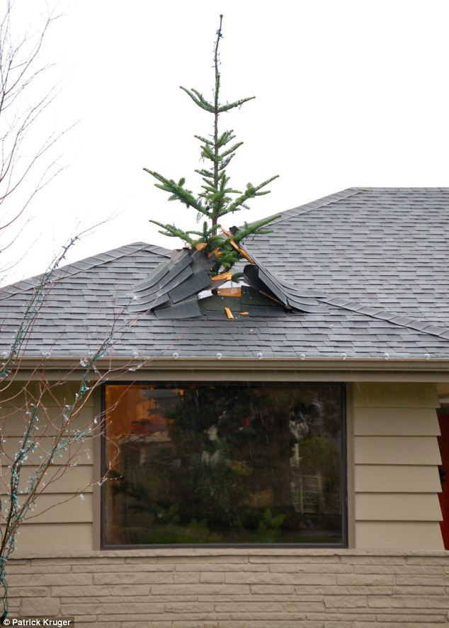 Patrick Kruger, who lives in Seattle, took his love for the holidays to a whole new level with a creative seasonal display. He cut the top of a tree and put it on the roof with some extra roofing material to create the optical illusion that the tree had broken through the sealing. via dailymail.co.uk
