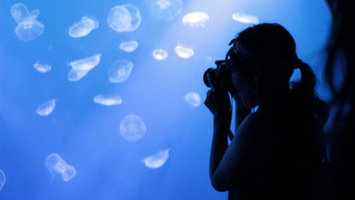 カメラ実験隊Vol.2知りたい水族館撮影のコツ