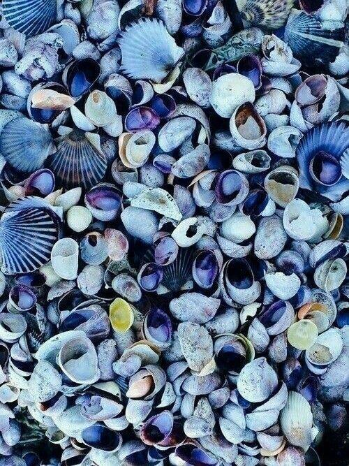 Conchas                                                                                                                                                                                 Mais