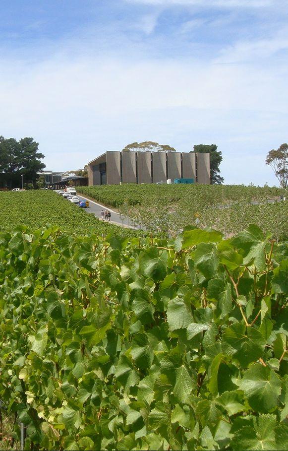 Moorilla Estate Winery, Hobart, Tasmania, Australia