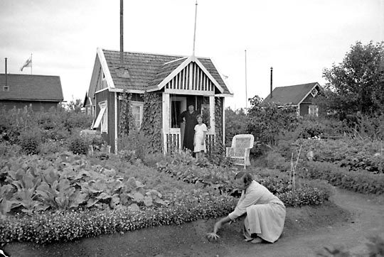 Siirtolapuutarha-aate korosti omavaraisuutta. 1930-luvun alussa perustetun Nekalan siirtolapuutarhan palstat kukoistivat jo saman vuosikymmenen lopulla. Siirtolapuutarhaviljelyksiltä moni perhe sai tuntuvan lisän ruokapöytäänsä. Kuva: Aamulehti 4.5.1938, Tampereen museoiden kuva-arkisto.