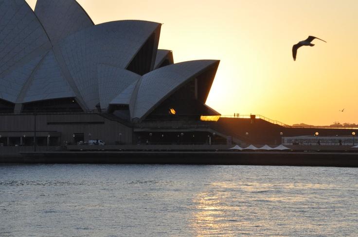 sydney opera house - sunrise