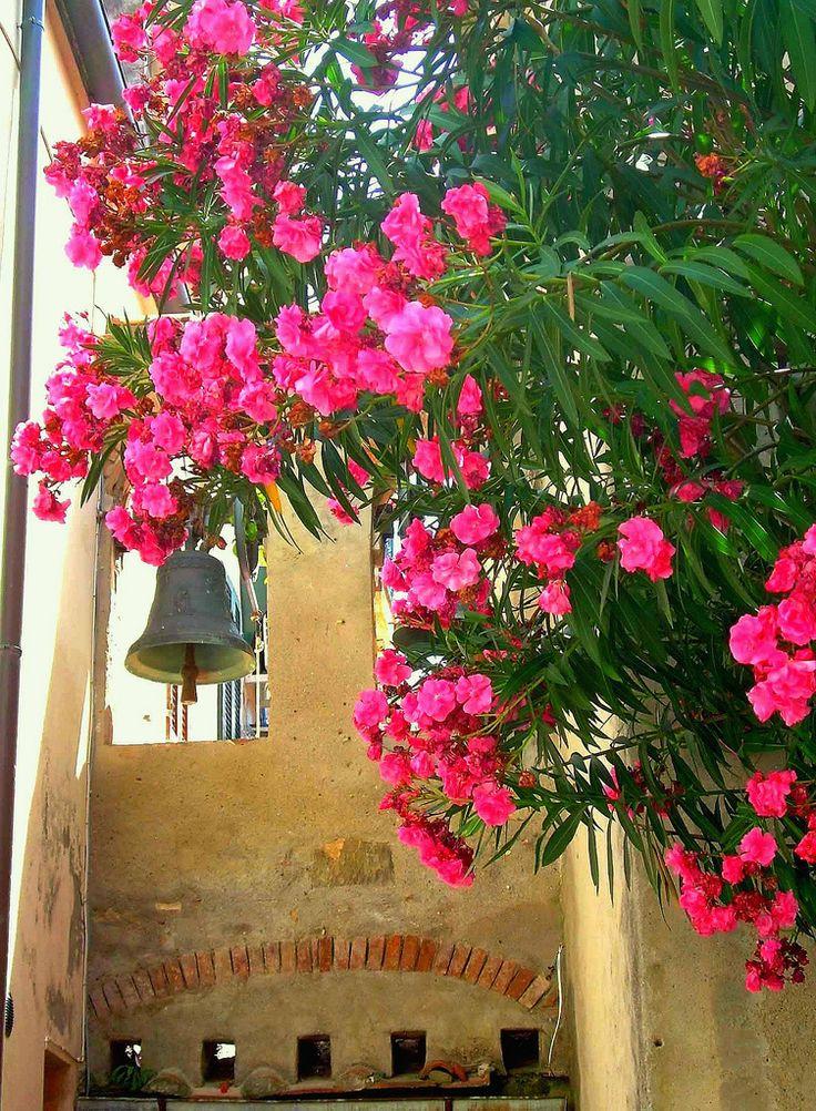 MARINA DI CAMPO (Isola d'Elba) | Campane ed oleandri.