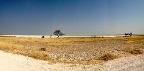 savana  Safari at the Etosha National Park - Namibia, Africa