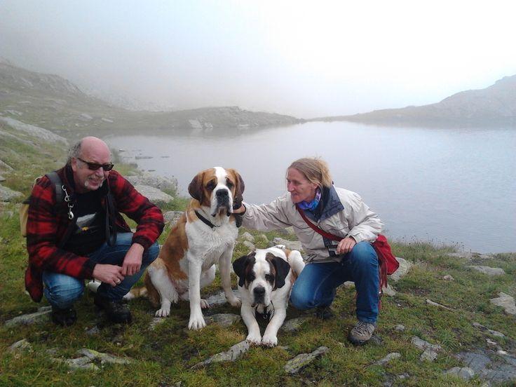 Wanderung mit Bernhardinern auf dem Gr.Sankt Bernhard-Pass