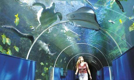 The #Oceanarium - #Bournemouth #Attractions