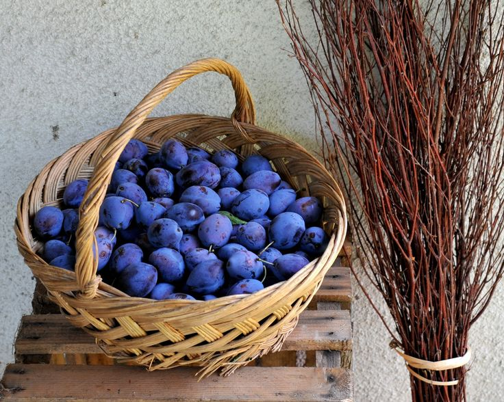Basket of plums. Romania.