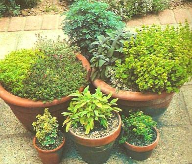 Image detail for -Potted Herb Garden, Potting Herbs, Herb Pot Garden