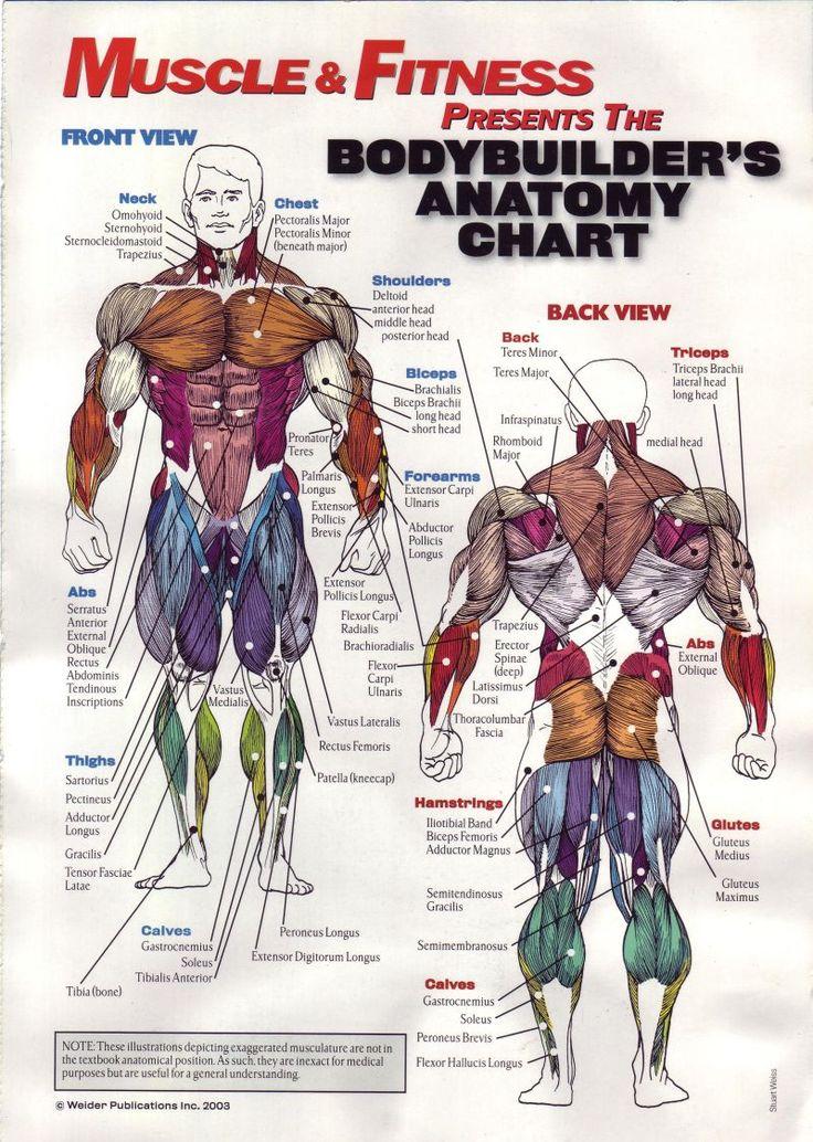 16 best workout and diet images on pinterest bodybuilder
