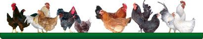 meyer_hatchery_ordering_poultry