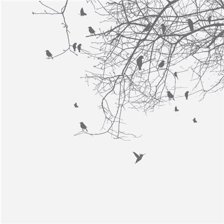 vindusfolie a fugleflokk