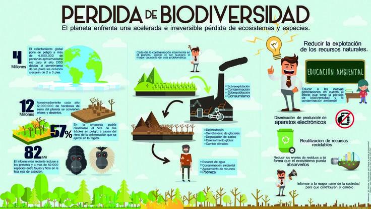 Infografia Biodiversidad Infografia Perdida de biodiversidad Infografia Kevin Diaz Rey Deisy Lopez Betancourt