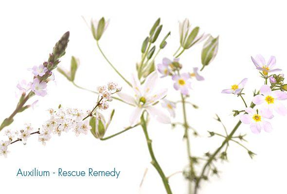 fiori-di-bach-rescue-remedy