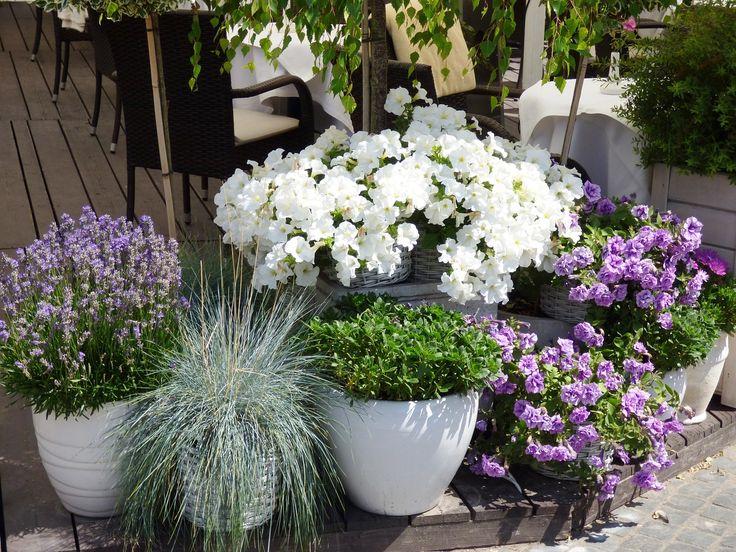 Najlepszą dekoracją estetycznie wykończonego tarasu jest... roślinność! Kwiaty, ozdobne trawy, a może miniaturowe drzewka?  #Tarasdrewniany #deskitarasowe