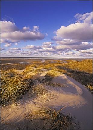 the Provincelands, Cape Cod, MA, USA