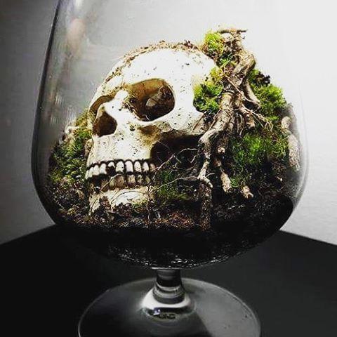 spcial halloween the skull terrarium
