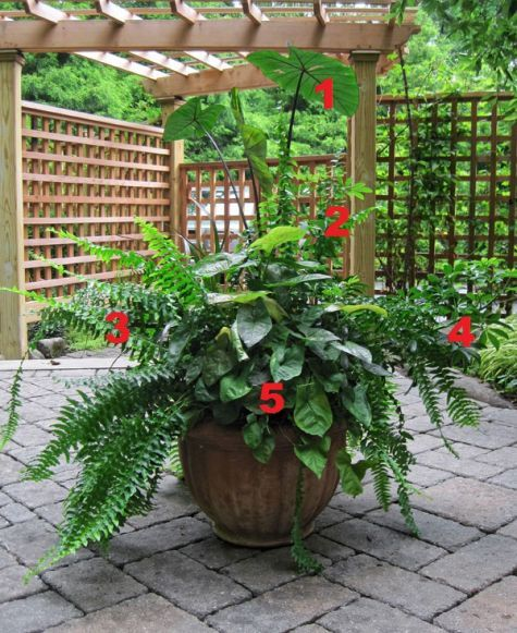 2012 Container Design Challenge Results: Fantastic Foliage   Fine Gardening