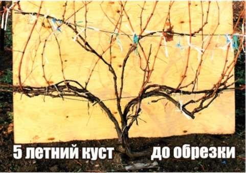 """Плодовый питомник """"ЛПХ Макаревич"""" г. Уссурийск. Статьи"""