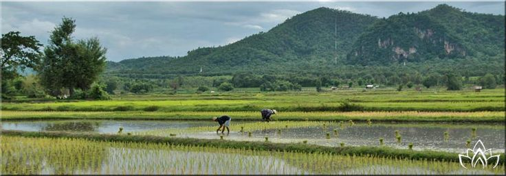 farang achat terrain thailande chanote